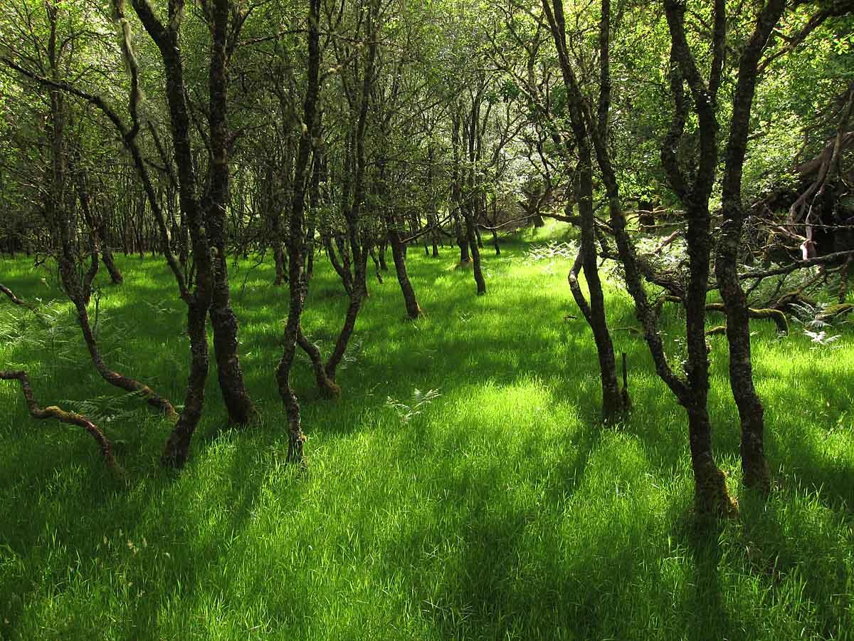 Woodland AP